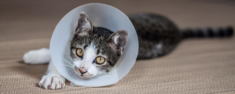 Försäkra katten - Moderna Djurförsäkringar b429ec35cf005