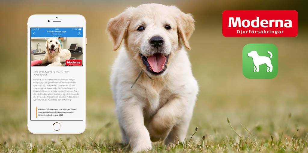 Moderna Djurförsäkringar i samarbete med Hundappen