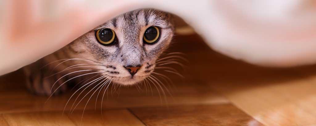 katt kissar inne