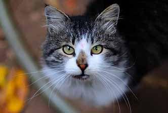 böld katt behandling